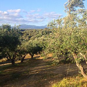 olijfgaard_1