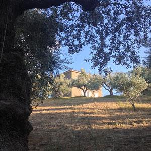 olijfgaard_5